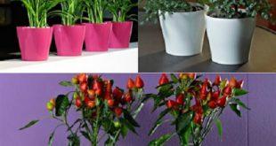 گلدان پلاستیکی ارزان اصفهان